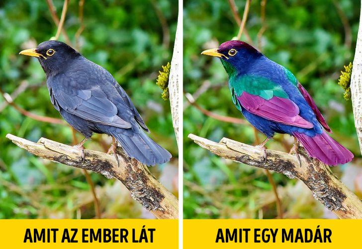 Amit ember vs madár lát